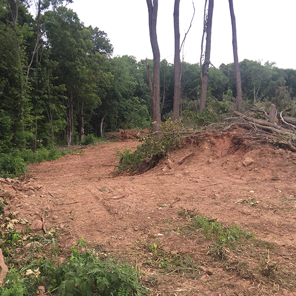 Land Clearing CT